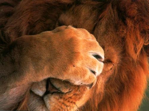 leon-verguenza